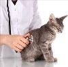 Ветеринарные клиники в Усть-Катаве